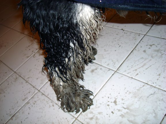 [filthy+leg]