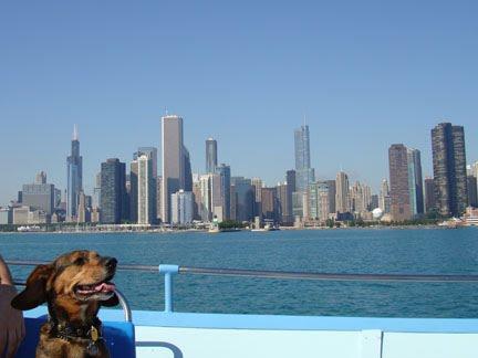 [dog+skyline]