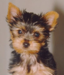 Dream Dog!