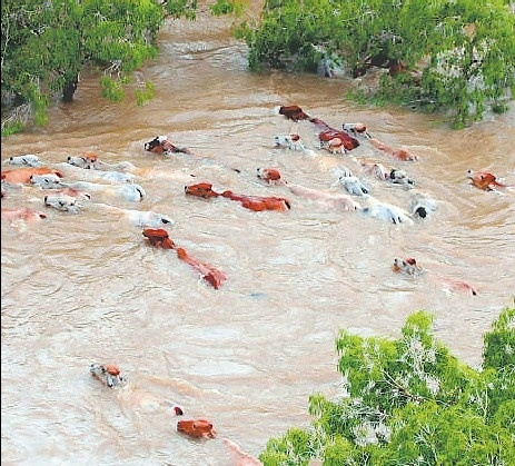 Right now you can throw your support behind the Queensland Floods by