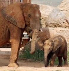 Montgomery Zoo 8/15/08