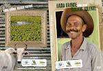 Projeto Disop Brasil. Divulgação da Agricultura Familiar no semi-arido Bahiano