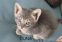 Duna - a manhosinha