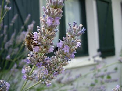 entre france estonie telle est l 39 europe pour sauver les abeilles plantons des fleurs dans. Black Bedroom Furniture Sets. Home Design Ideas