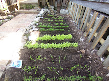 grow a vegetable patch.