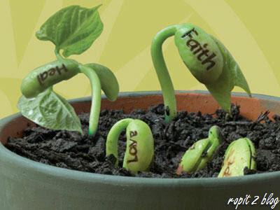 drop beans