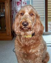 Nellie 8/05-2/16