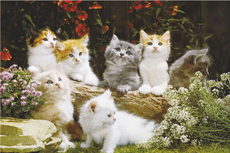 wallpaper cute babies. wallpaper. images of cats