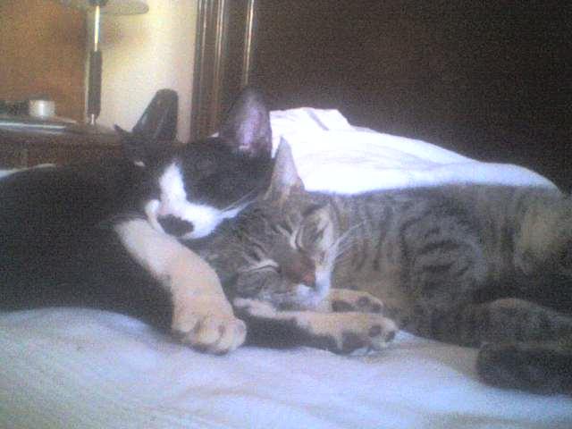 Dos gatitos de Silvana y Julio