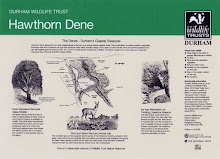Hawthorn Dene interpretive panel