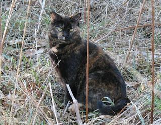 Katt på vårpromenad