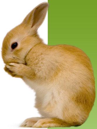 tahun kelinci akan segera dimulai yaitu pada 3 februari 2011 hingga 22 ...
