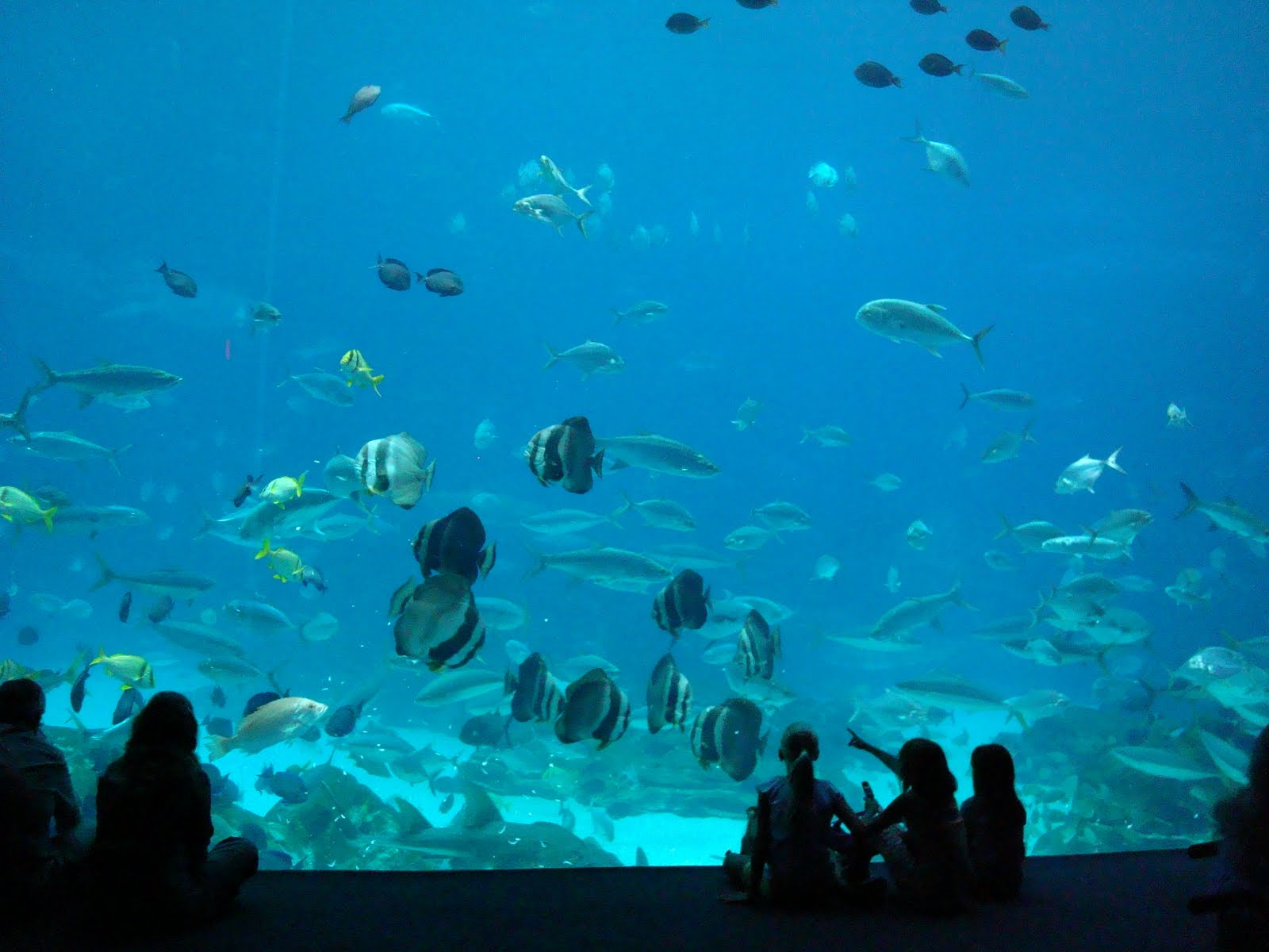 Tallahassee daily photo georgia aquarium Aquarium in georgia