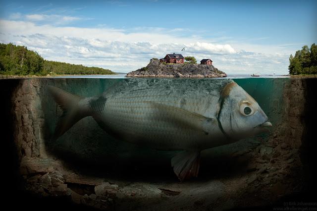 isla sobre un pez