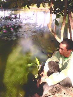 kolam teratai gambar