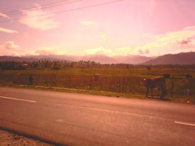 sawah desa tanjung padang