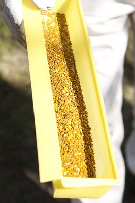 Samlat pollen