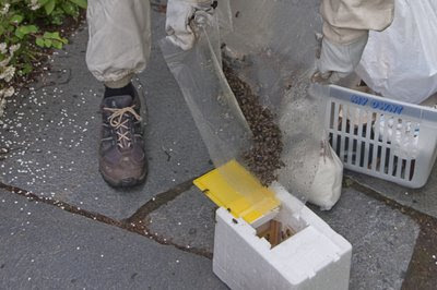 Parningskupa laddas med bin