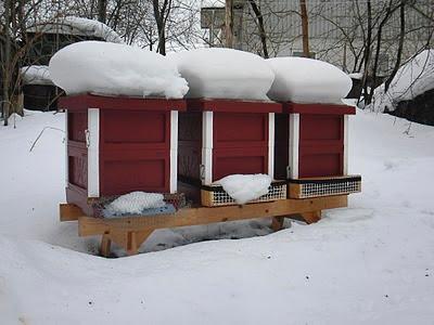 Bikuporna på vintern