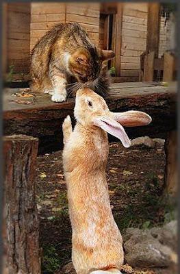 Tufy y Thumper