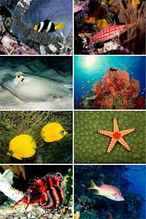 Обои для рабочего стола Подводный мир