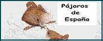 Pájaros de España