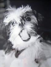 Sassy Dog #1