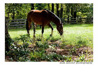Horse in Field Photo