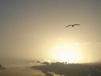 volar libre lyrics: