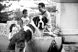 Anjing Terbesar urutan 8