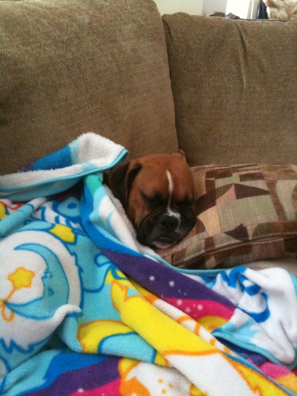[Gus+sleeping]