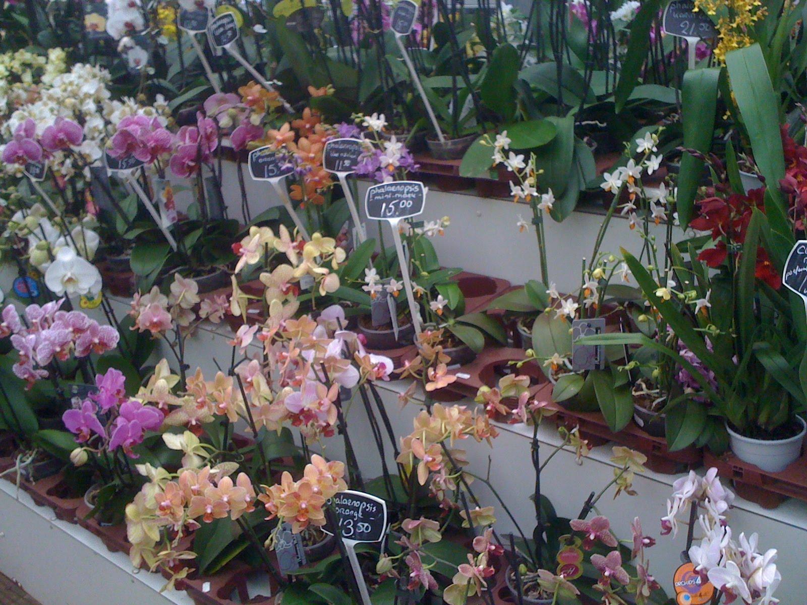 Inspire Bohemia The Amsterdam Flower Market