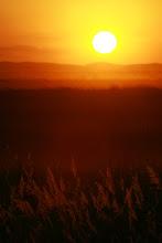 Por-do-sol no Pantanal
