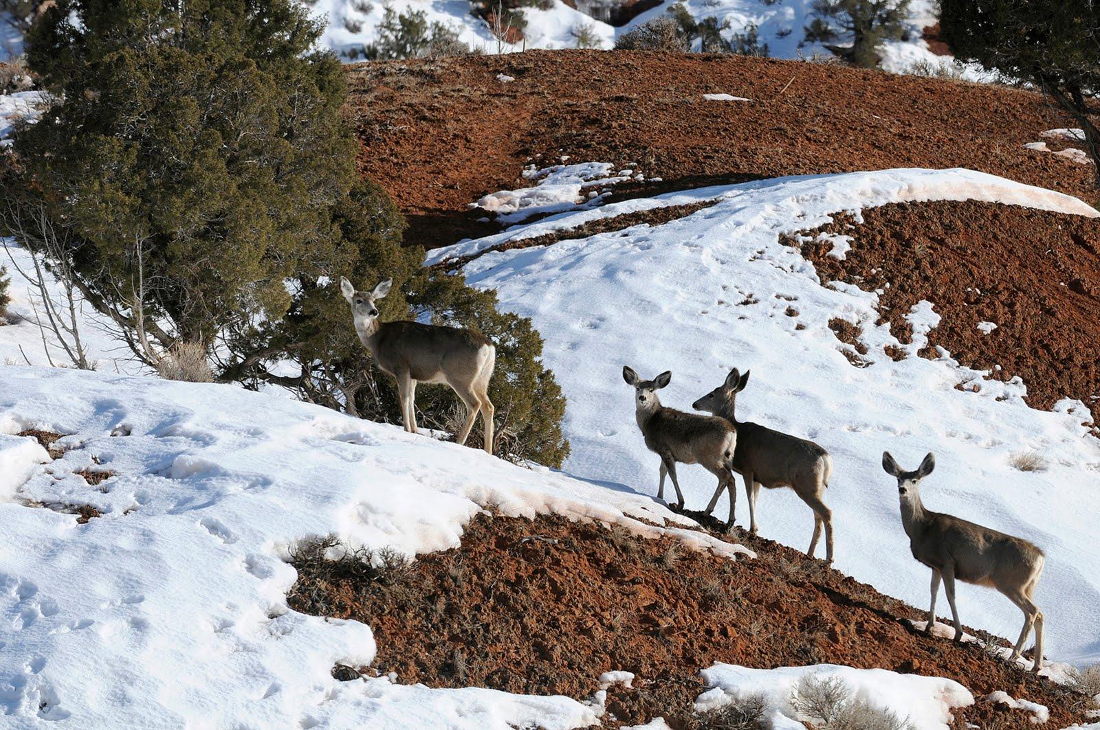 Backcountry utah 39 s outdoor adventure journal apply for for Utah fishing license cost