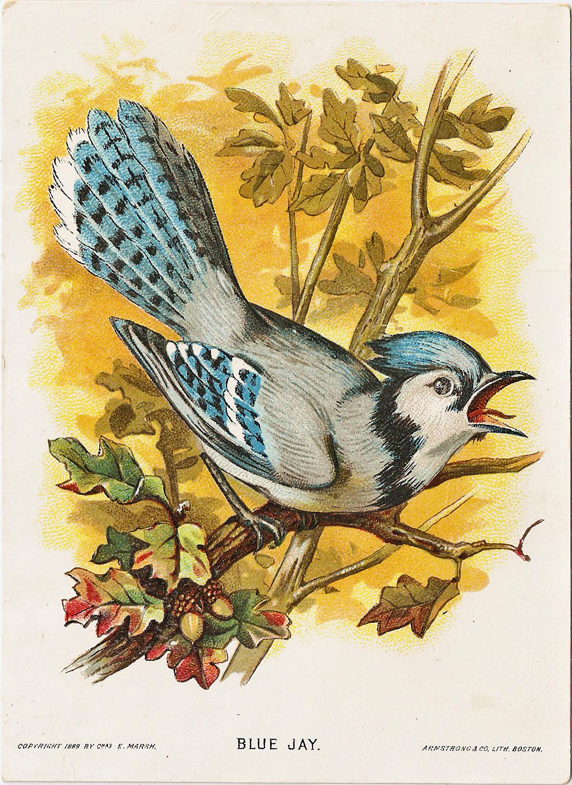 Free vintage clip art marsh co bird series