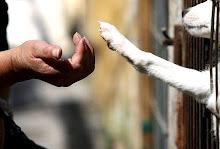 No compres, adopta!