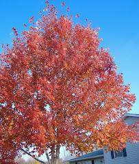 Ohio Fall