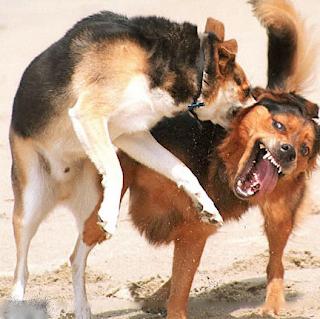 Shock Collar Older Dog