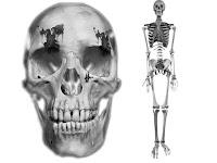 череп, кости,ron skulls