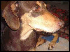 Helado, la perra más besha: