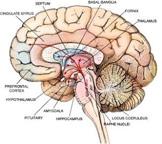 Brain Flow Chart