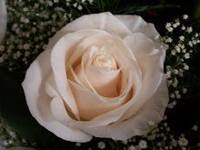 White Roses from Rob