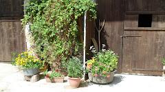 Notre passion !!!! les plantes décoratives et les arbres