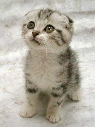 cute puppies and kittens wallpaper. makeup of puppies and kittens.