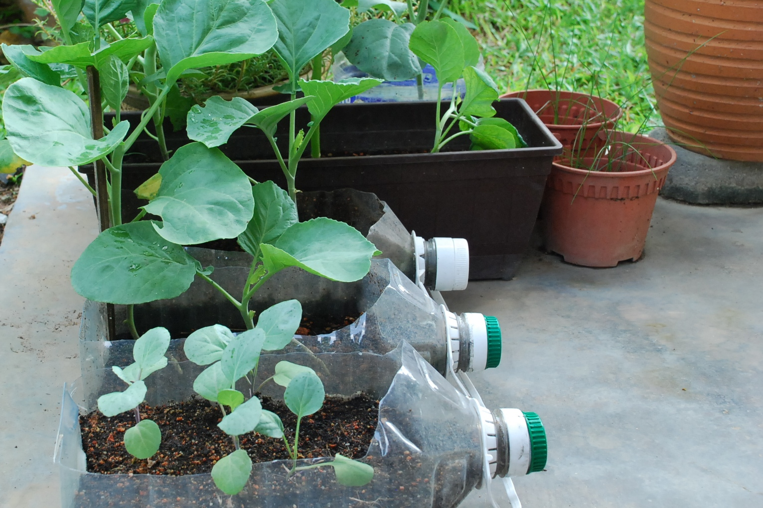 My Little Vegetable Garden A Glimpse At Container Gardening