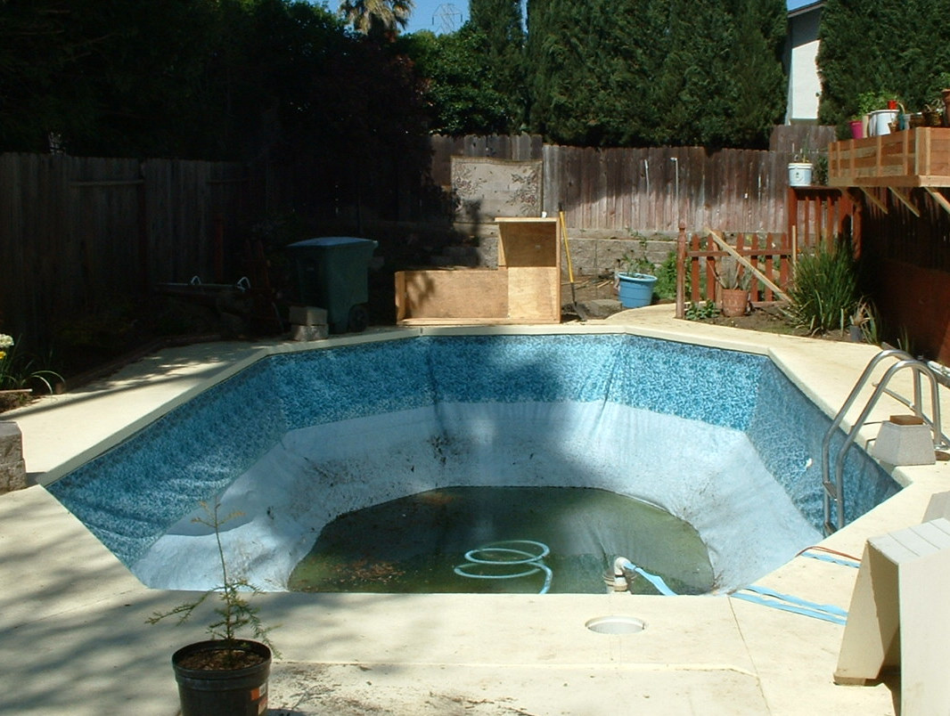 Swimming pool to natural pond one year for Raising fish in a swimming pool