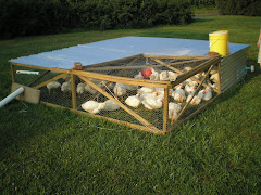 Chicken Tractors