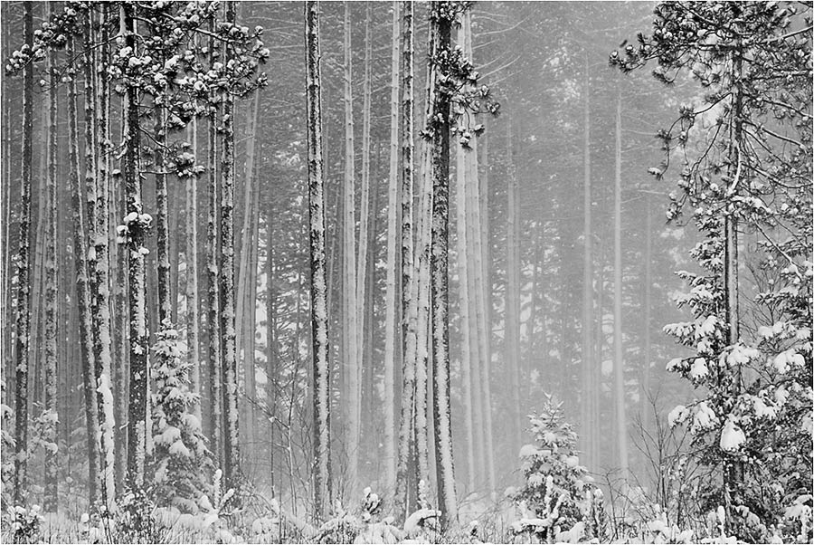 http://1.bp.blogspot.com/_NK_ixNyhQRY/TP-tQmEtvRI/AAAAAAAABxo/WcwV6Bx2Un0/s1600/Blowing_Snow.jpg