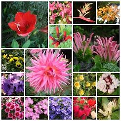 ดอกไม้หลากสี...ที่หลากหลาย...