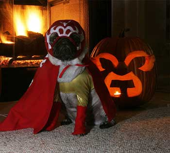 K Dog Wcw Dogs Wearing Costumes ...